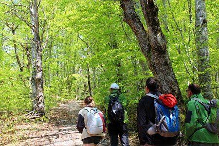 Forêt des Coulmes