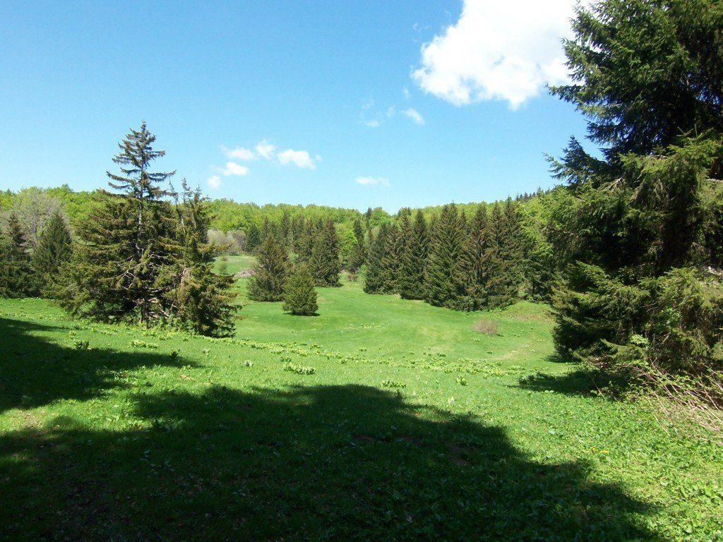 Plateau des Coulmes