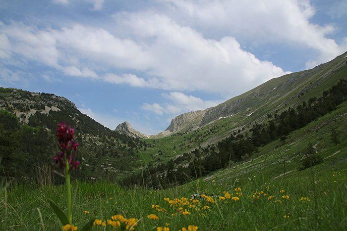 Col de Lachau